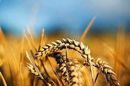 реализация сельскохозяйственной продукции